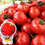 【ご報告】フルーツトマト「星のしずく」青果1kgが現在売り切れております。2013年11月