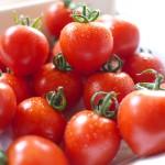 フルーツトマトは「冬」が旬!!