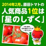 2014年2月の原田トマト人気商品は1月に続きフルーツトマト「星のしずく」でした!