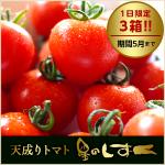 「天成りフルーツトマト星のしずく」の販売を開始致します!!