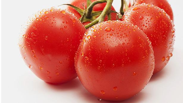 _63354142_c0137283-vine_tomatoes